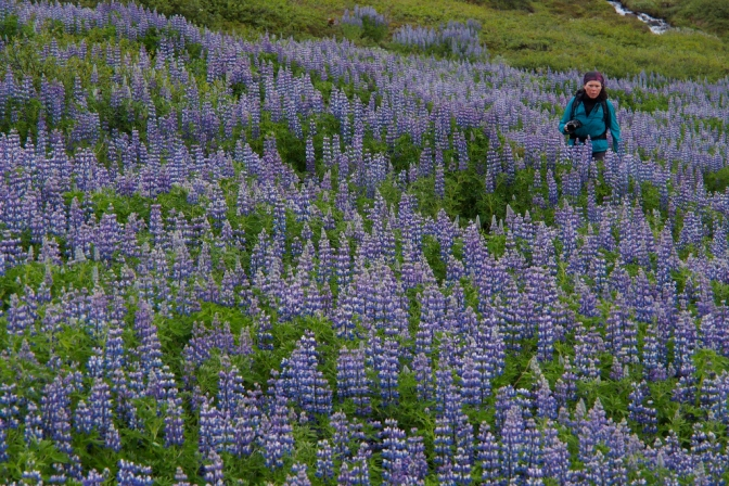 Jan in the Lupin