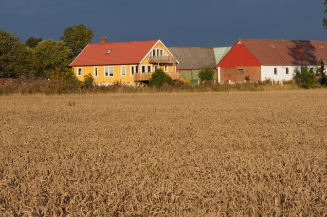 Wheat fields with colourful houses in Halland.