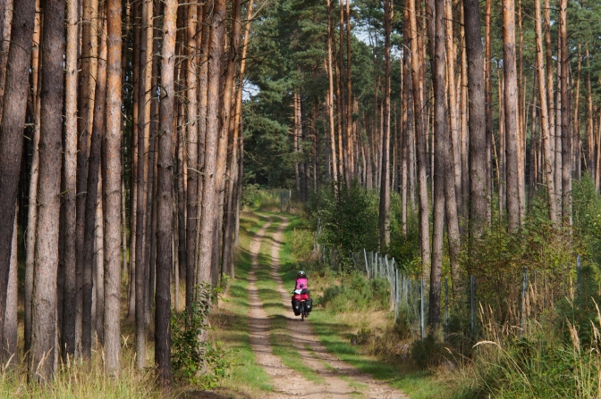 Cycling through the forest along the R1 Cycle route.