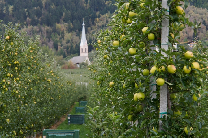 Apple orchards on the way down to Merano.