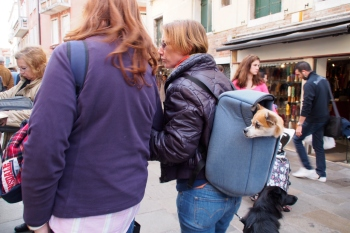 Walking the dog in Venice.