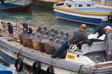 Transporting wine.