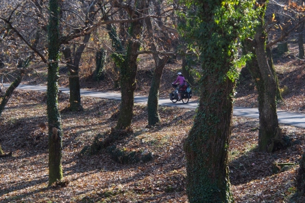 Chestnut forest.