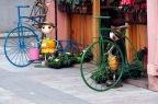 Shkodra Bicycle City