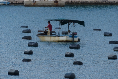 Oyster harvesting at Mali Ston.