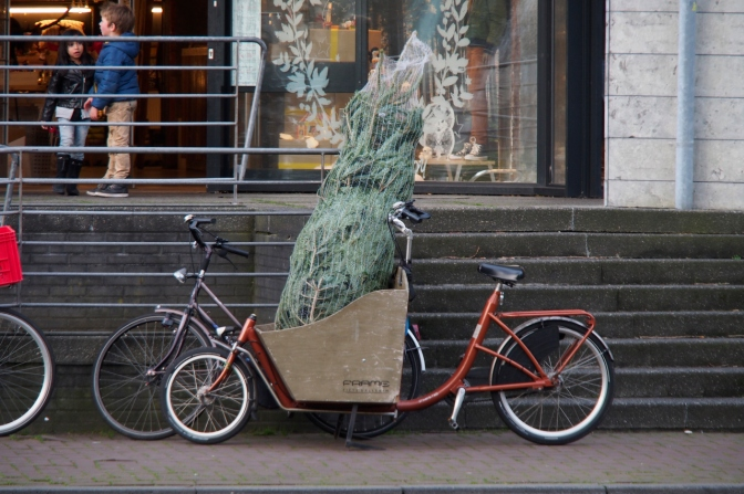 Picking up a Christmas tree with the bicycle. Why not!