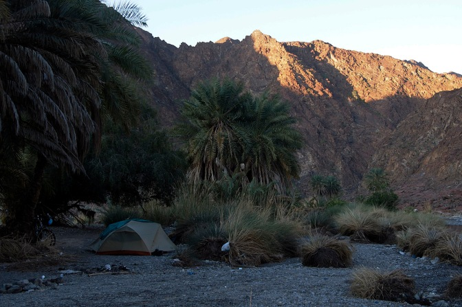 Camp under the palms in Wadi al Abyad.
