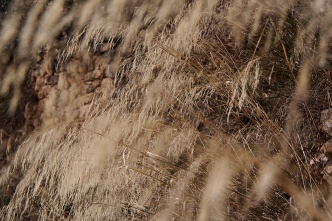 Winter grasses.
