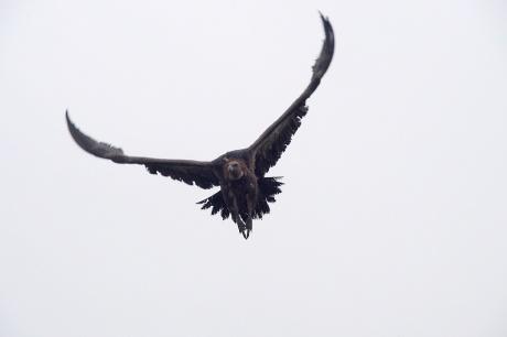 Vulture.