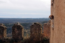 Dog at the monastery.