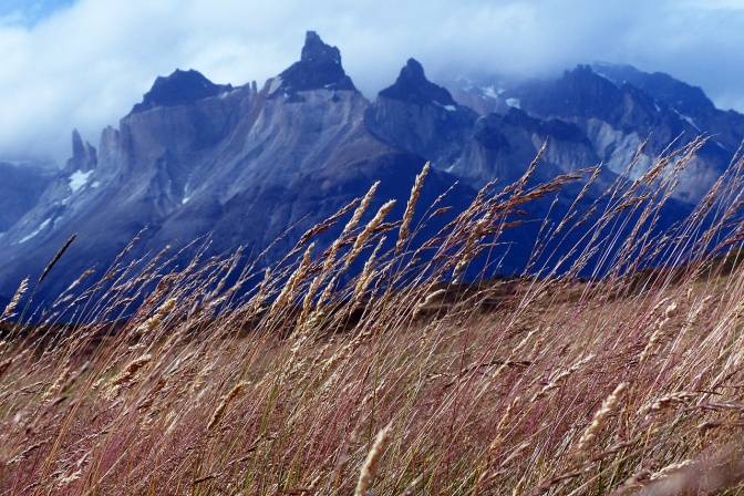 Hiking through pampas to Campemento Paine Grande