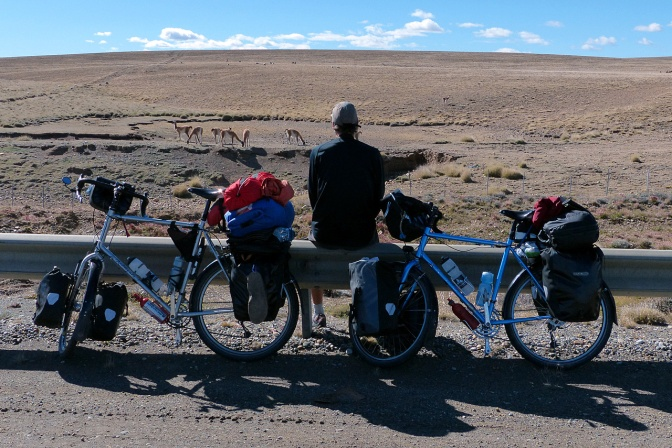 Snack break with the Guanacos.