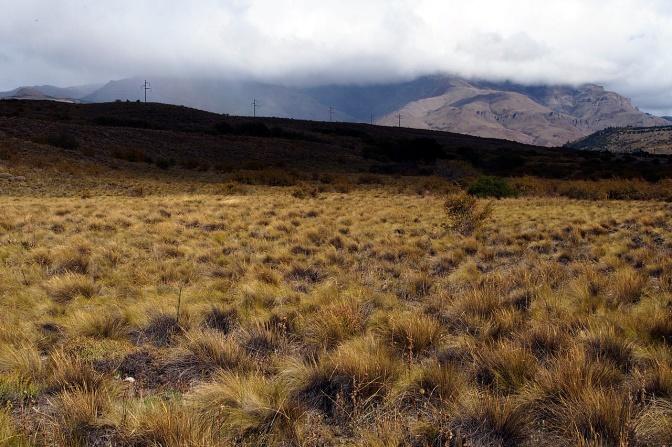 Pampa north of San Martin De Los Andes.