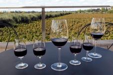 Our flight of wines for tasting: Temperanillo, Malbec, Reserva blend, Merlot and Cabernet Sauvignon.