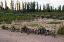 Bike and wine is popular in MaipϜ.