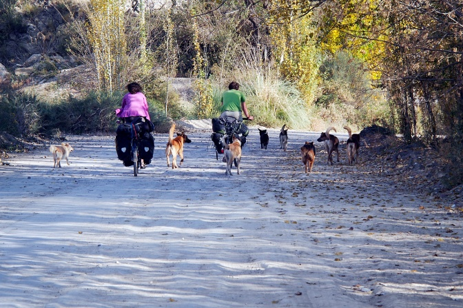 Leaving Potrerillos with a pack of dogs in tow.