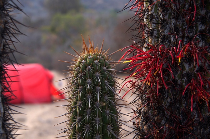 Cactus camp near Las Palmas.
