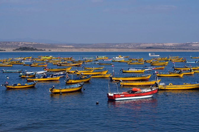 Tongoy fishing boats.