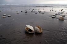 Clam shells.