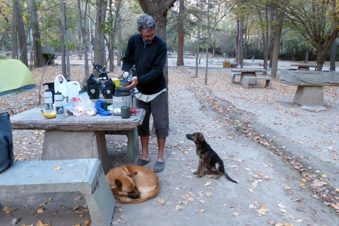 Paul making dinner with an audience in the Potrerillos camp site.