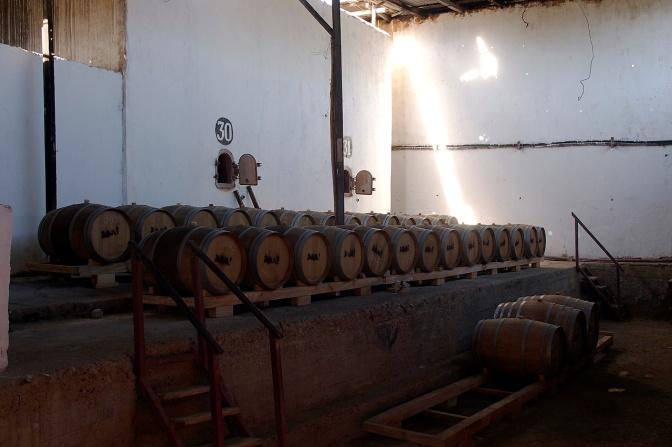 Aba Pisco aging in oak.