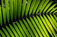 Jungle pattern.