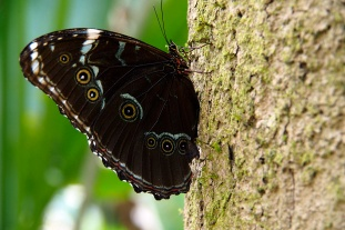 A large moth.