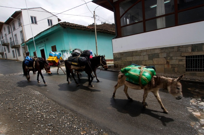 Mule and donkey train returning from the mountains in Chacas.