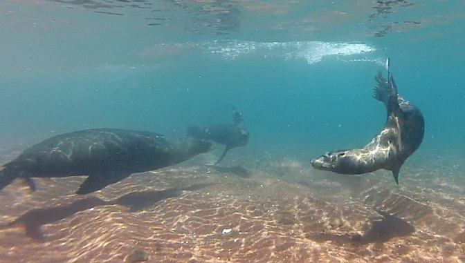 Snorkelling with sea lions off R‡ábida Island.