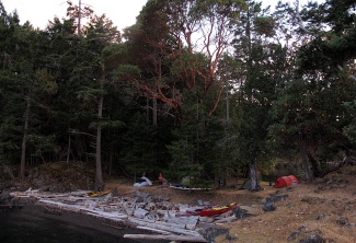 Camped under a magnificent arbutus on Prevost Island.