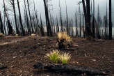 Grass is already coming back following a forest fire in Glacier National Park along Going to the Sun Road. The road had reopened to cyclists just a few days before we arrived.