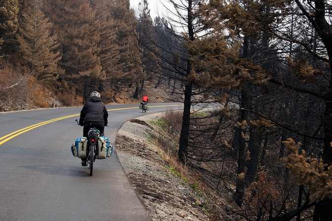 Cycling through a recent burn on Going to the Sun Road.