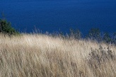 The golden prairie grass along Lower Waterton Lake.