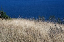 The golden prairie grass along Lower Waterton Lake.