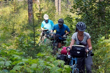 Pushing through the dense brush on the Lost Lake Trail into Elkford.