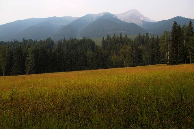 Grassland north of Elkford.