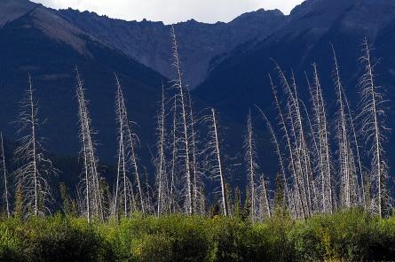 Vermillion Lakes in Banff.