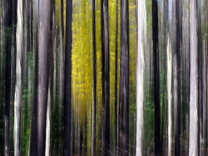 Forest abstract.