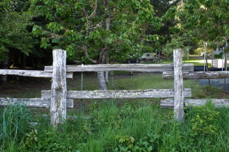 Orchard and fence.