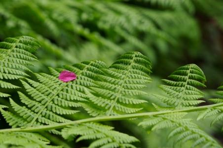 Fern with petal.