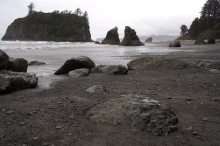 Ruby Beach sea stacks.
