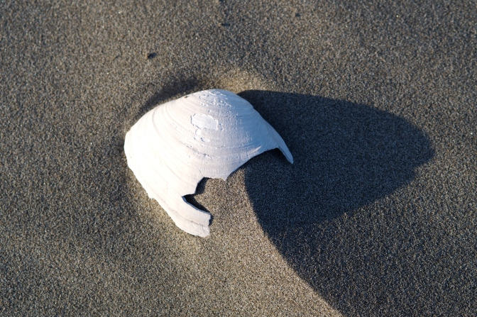 Shell and shadow at Grayland beach.