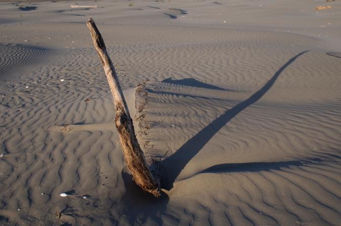 Driftwood sculpture on Grayland Beach.