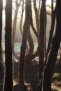 Trees at Nehallem Beach.