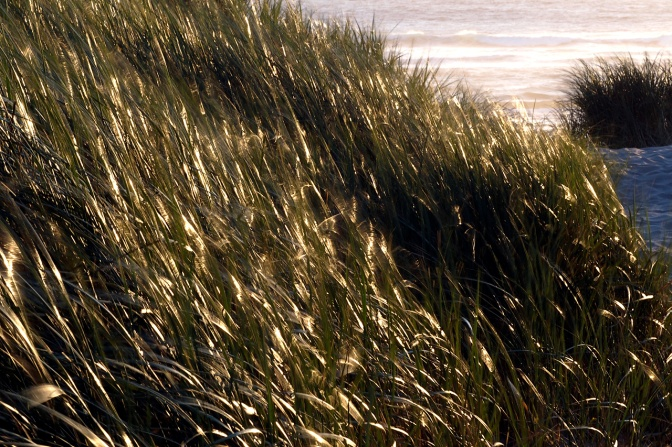 The wind playing in the dunes at Nehalem.