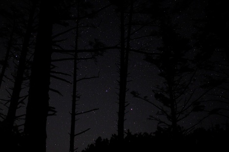 The stars through the trees in our camp site at Cape Lookout.