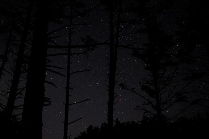 Starry sky through the trees at Cape Lookout.