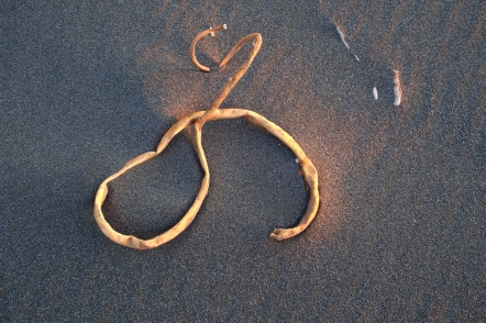 Bull kelp art on Arizona Beach.