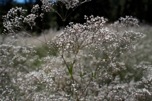 These flowers smelled like honey and lined the trail for many kilometres.