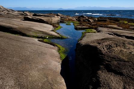 Tidal pools to explore along shore.